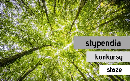 zdjęcie drzew ilustrujące artykuł Aktualne stypendia i konkursy 2